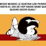 Frases de Quino, sus más famosas citas